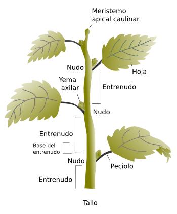 Partes De La Planta Y Sus Funciones Tallo De La Planta Fotosintesis De Las Plantas Curso De Jardineria