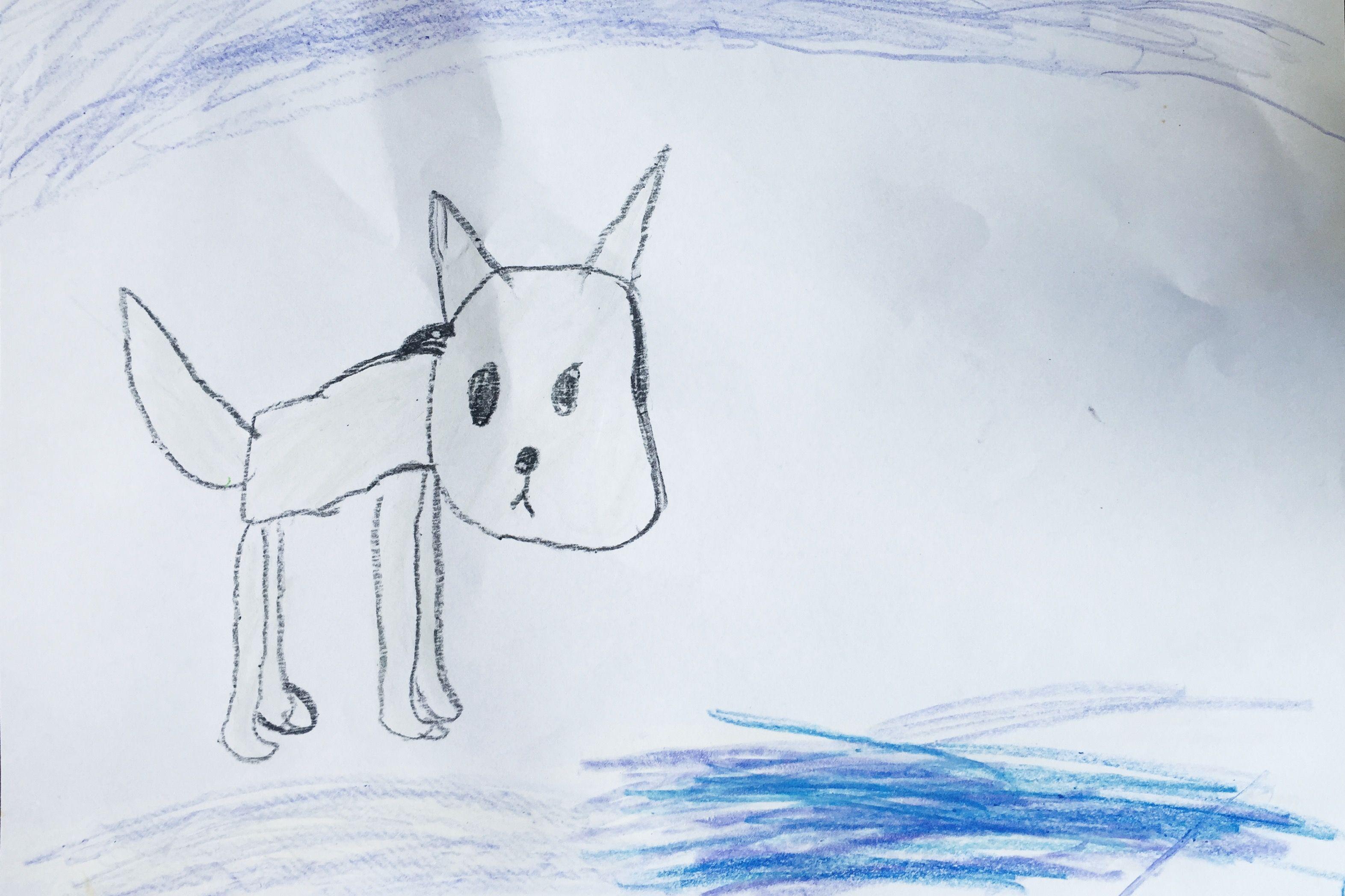 Line Drawing Fox : Arctic fox dylan's drawings pinterest