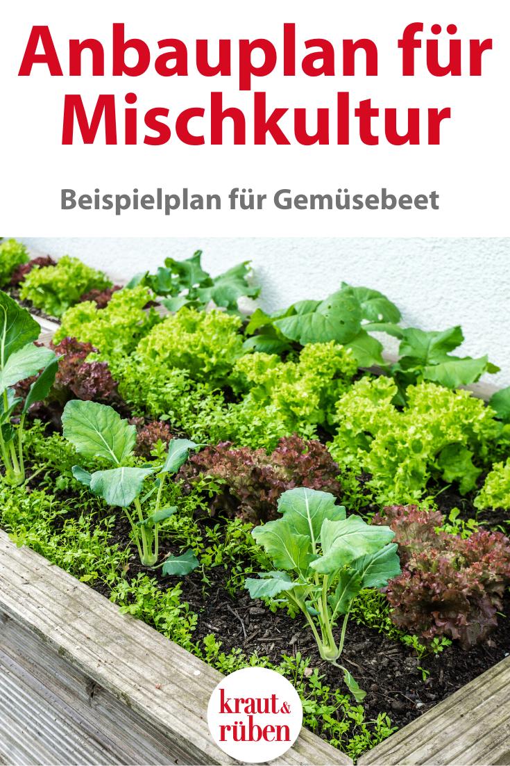 Anbauplan für ein Gemüsebeet: ein Beispiel
