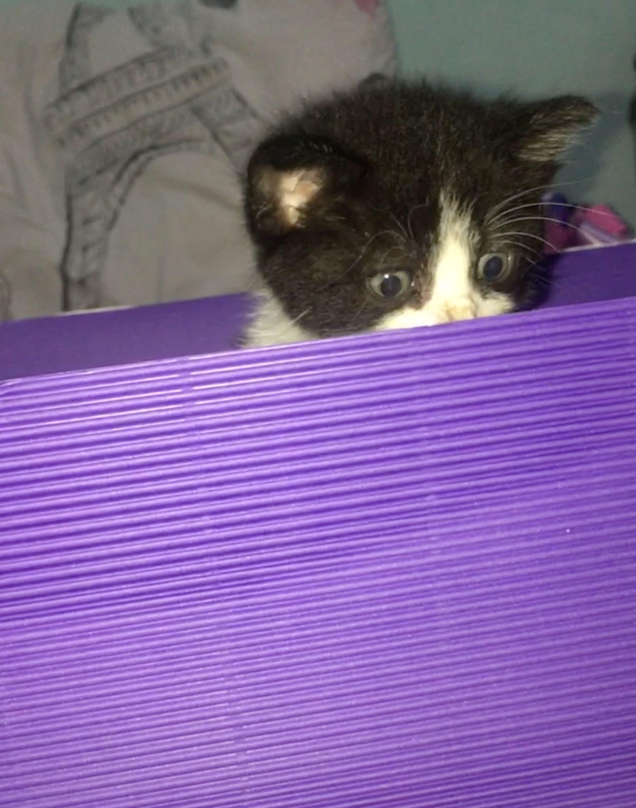#funnycats #kitty #cats #cutestanimals #beautifulcats #catlovers #kittens #photo #animals