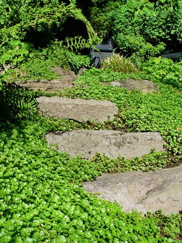 Sedum John Creech Stonecrop Sedum Garden Sedum Ground 400 x 300