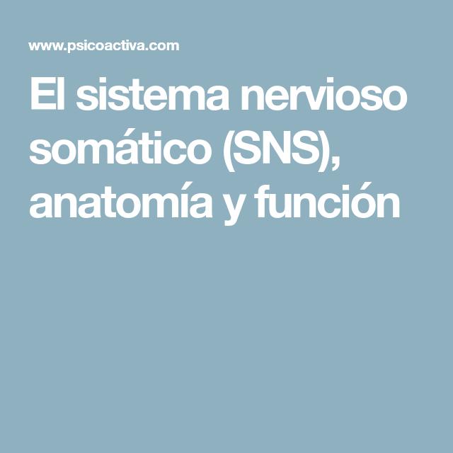 El sistema nervioso somático (SNS), anatomía y función | Educación ...