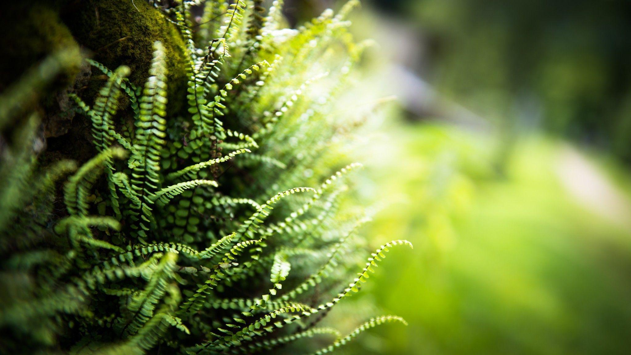 Green grass switzerland macro ferns (2048x1152, grass