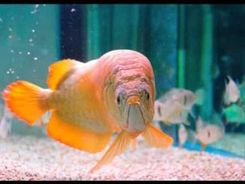 Pout Pout Fish Rap Version Ocean Pinterest The O