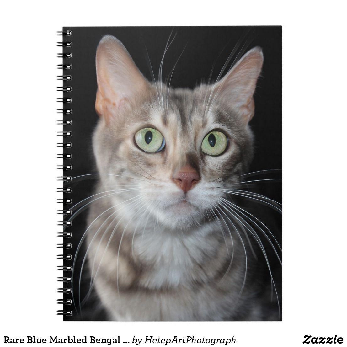 Rare Blue Marbled Bengal Cat Photograph Spiral Notebook Zazzle