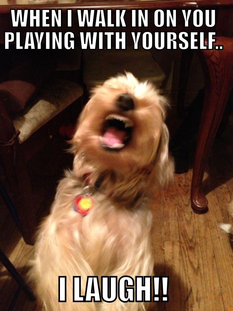 laughing dog meme
