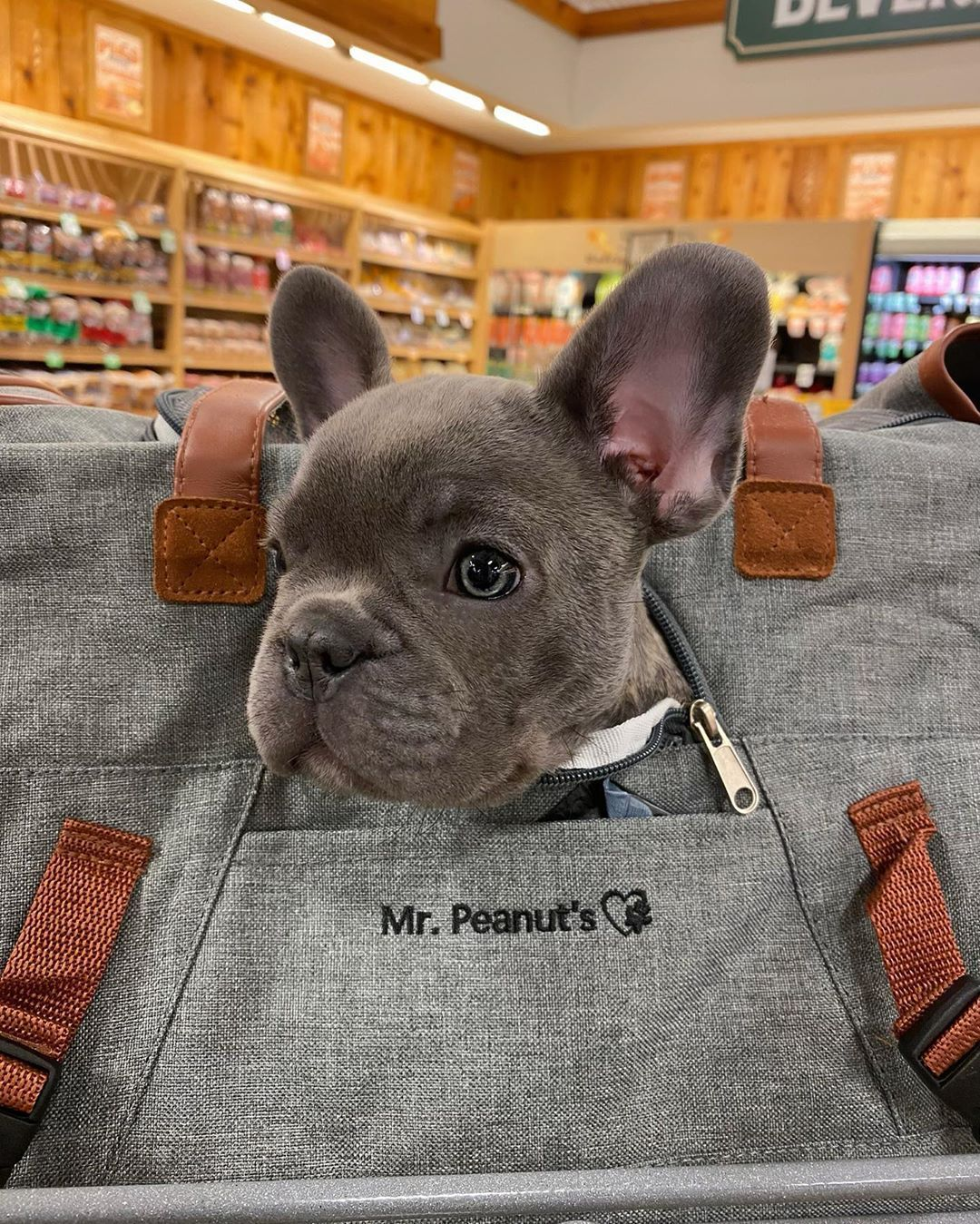 Pin on FRENCHIE