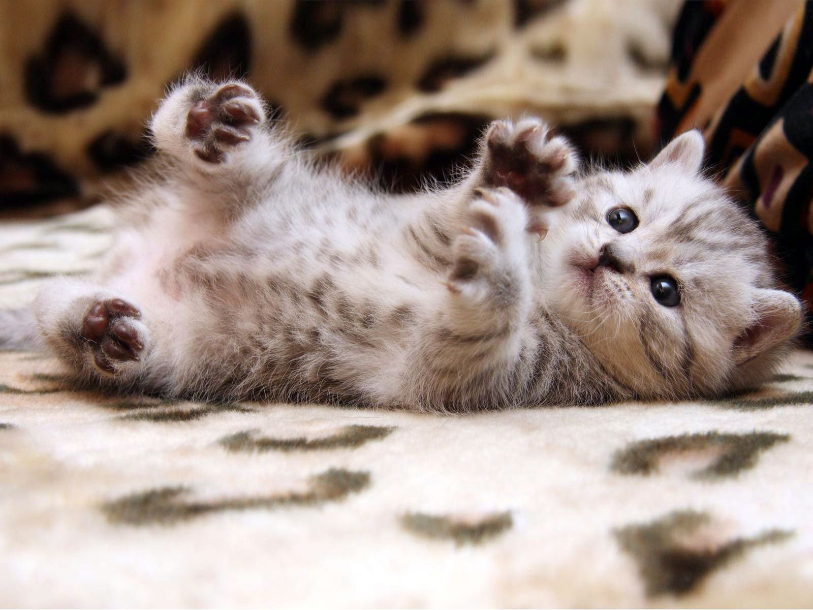 How Much Do You Really Know About Cats Baby Cats Kittens Cutest Kitten Pictures