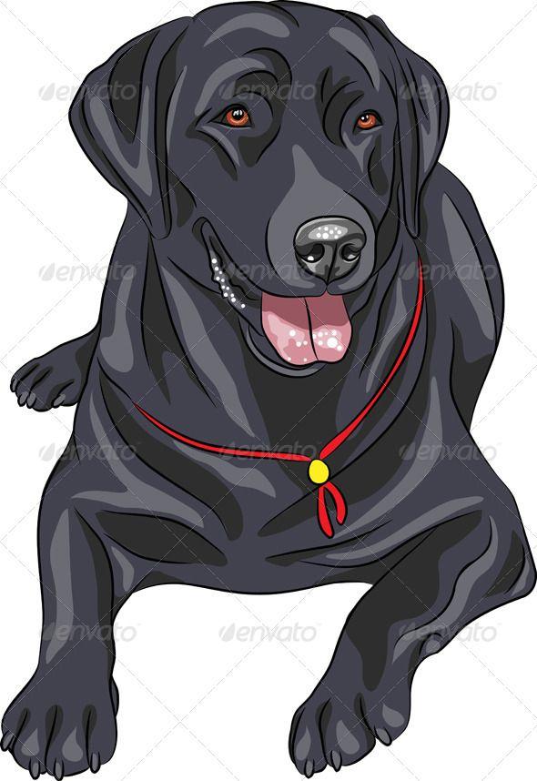 Labrador Retriever Black Labrador Retriever Labrador Art Labrador Puppy