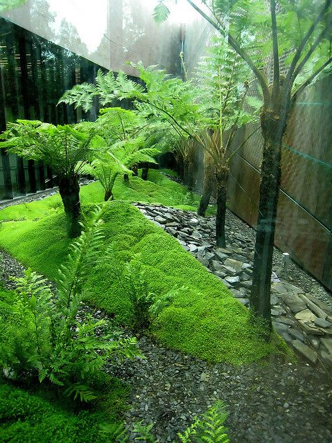 De Young 4381 Landscape Design Modern Garden Outdoor