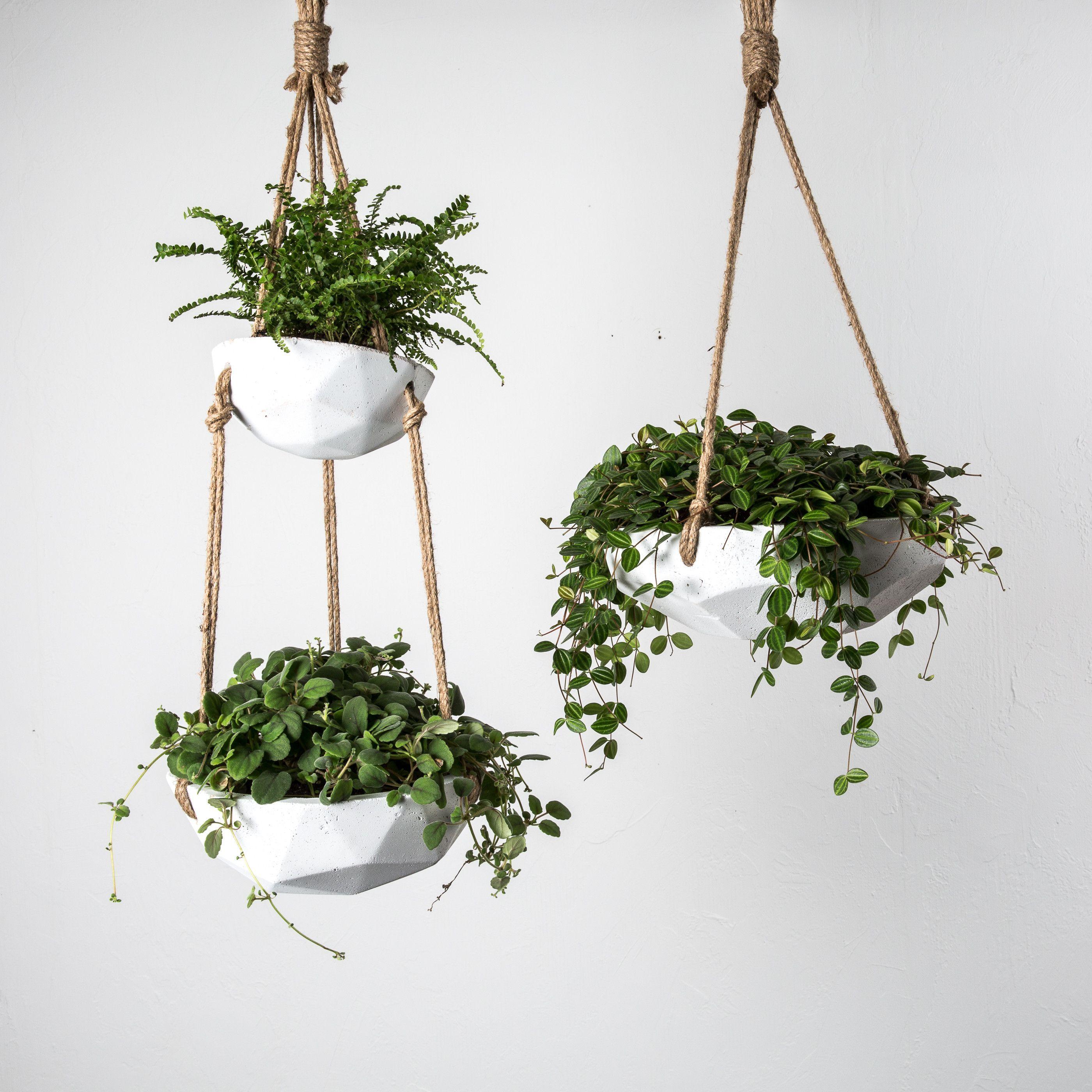 Arden Hanging Planter Hanging plants, Hanging planters
