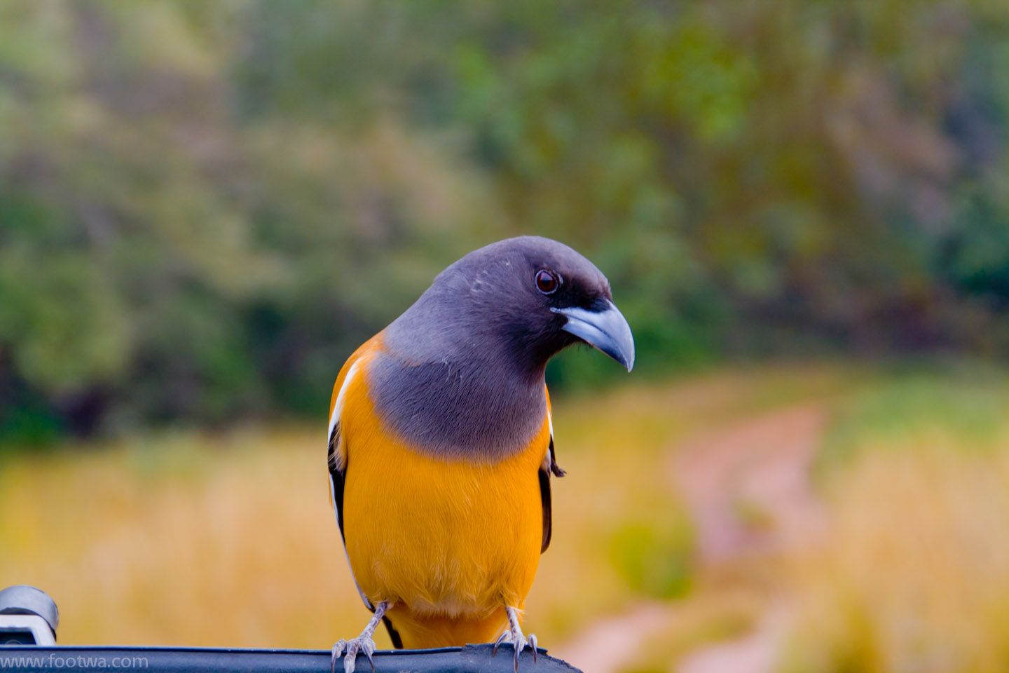 Image result for Birds to be spotted in Ranthambore