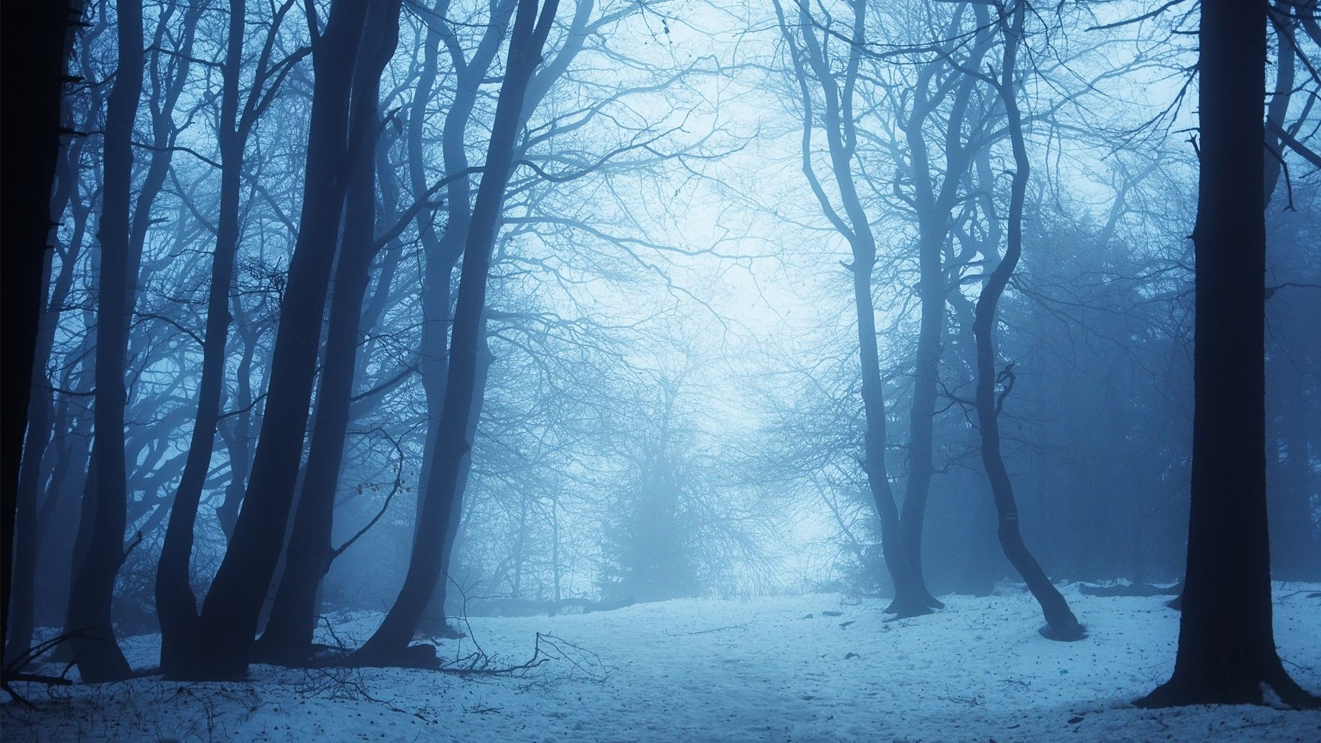 Related image Tree Winter forest, Forest