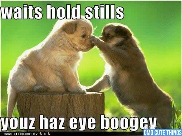Animal Memes Omg Cute Things Pet Animales Graciosos Imagenes De Animales Tiernos Animales
