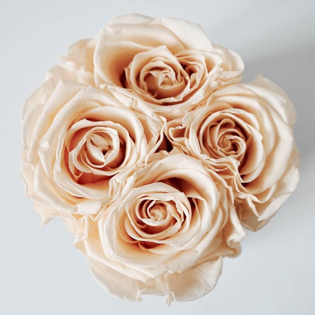 echte konservierte rosen in der farbe champagne bestelle jetzt deine premium infinity rosen auf. Black Bedroom Furniture Sets. Home Design Ideas
