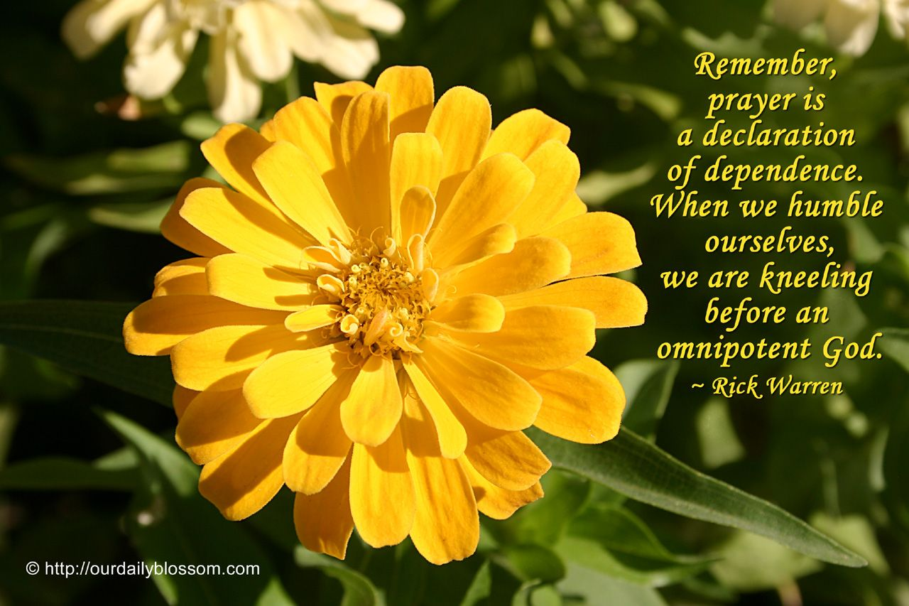 Spiritual Quote Rick Warren Our Daily Blossom Spiritual Quotes Rick Warren Jesus Facts