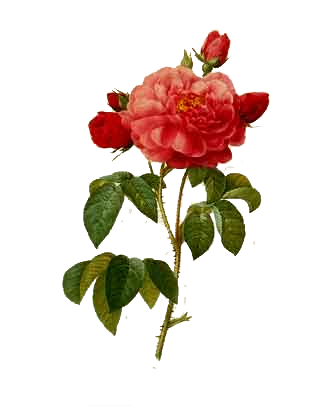 Http Jaehos Tumblr Com Post 27031849196 Texture Pack 29 Here I Am Once Again With A Png Botanical Drawings Botanical Illustration Botanical Prints