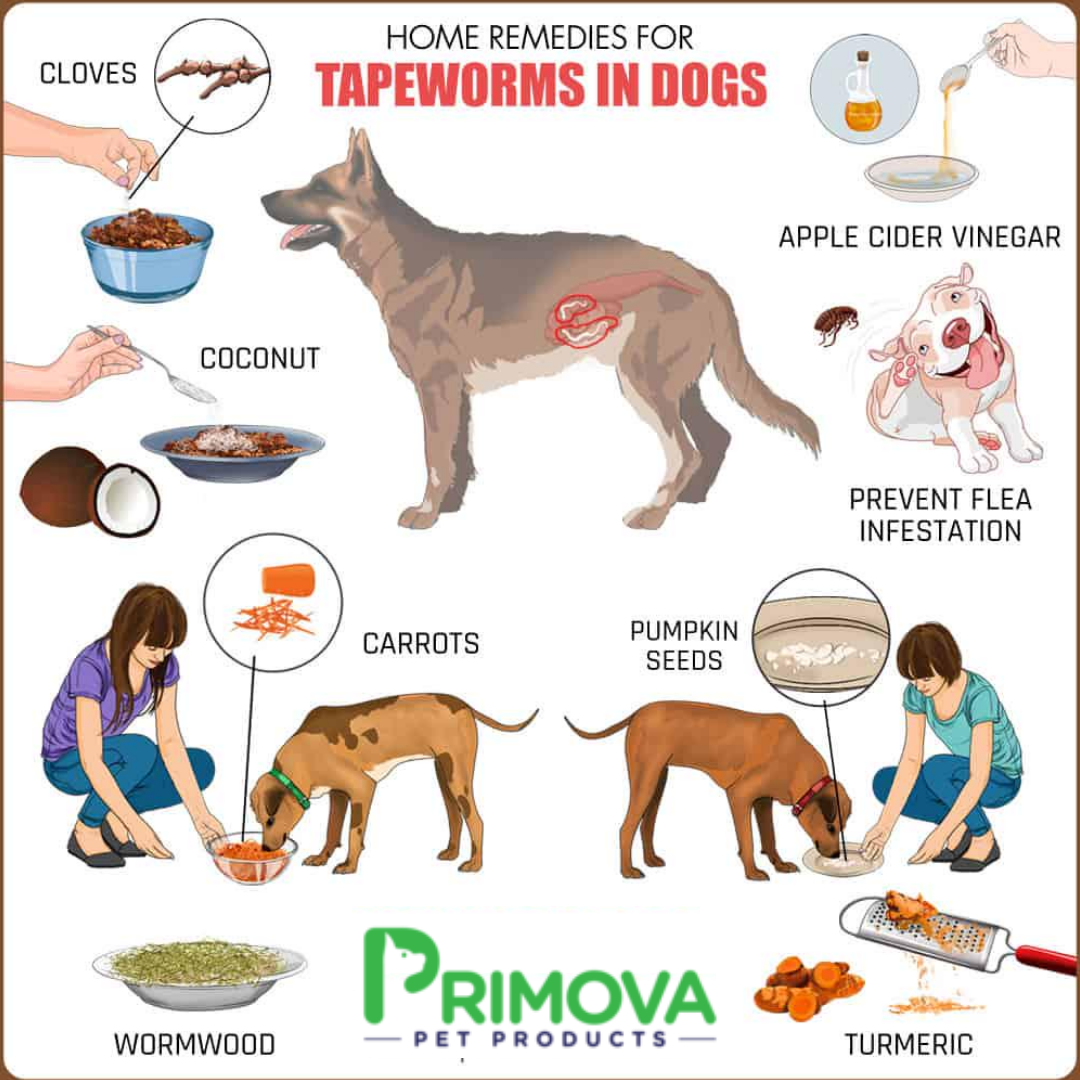 Primova Tapeworms In Dogs Dog Remedies Worms In Dogs