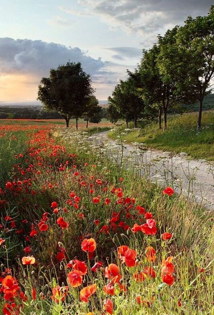 Abundant Wild Flowers Landscape Photography Nature Photography Landscape Photos