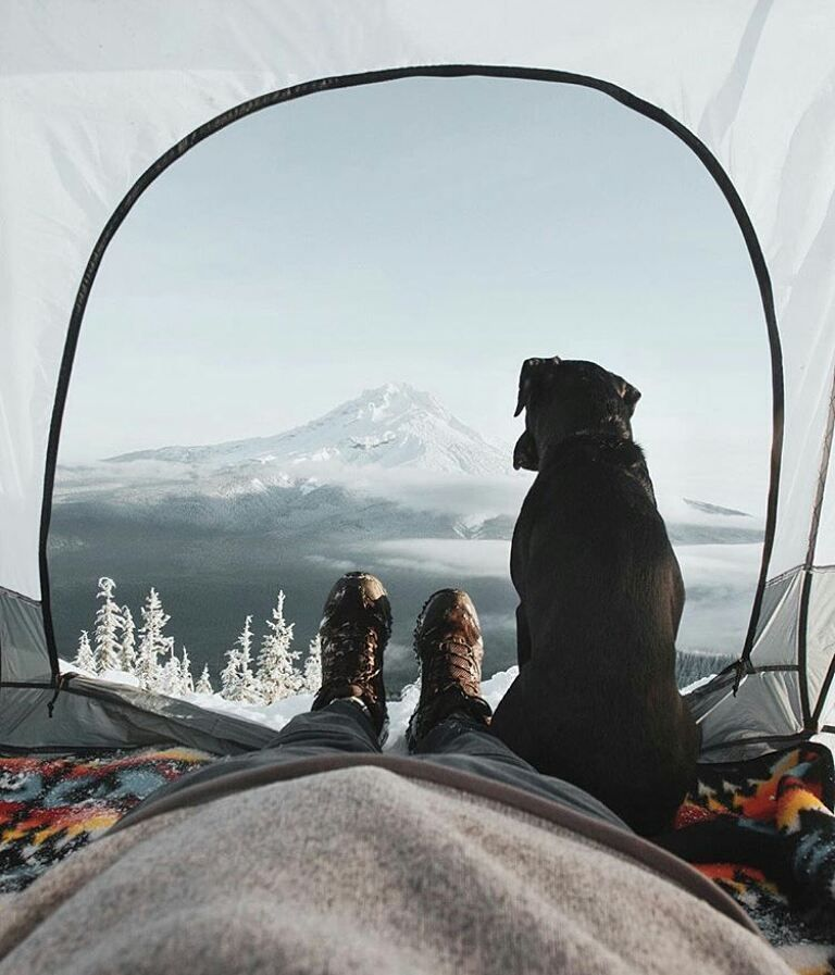 Wake up with your best friend this morning like @rodtrvn?!  Tag your travel buddy below!   #travel #instatravel #travelgram #traveling #travelling #mytravelgram #travelingram #igtravel #traveler #travelphotography #traveller #travels #traveltheworld #travelblog #travelblogger  #newaccount #nature #naturelovers #instanature #traveltography #wakeup #camping #dog #friend #travelbuddy #feature #oregon