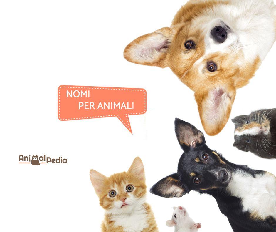 Sei Alla Ricerca Di Nomi Per Gli Animali Domestici In Questa