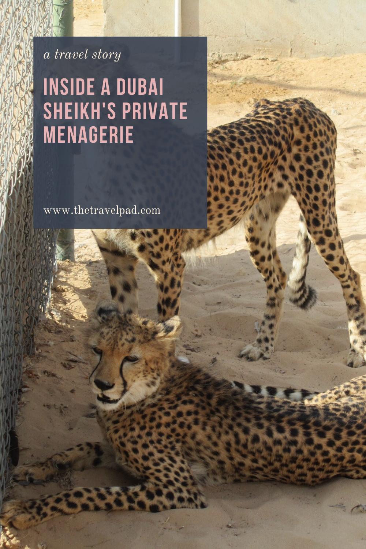 Inside a Dubai Sheikh's Private Menagerie in 2020 Travel