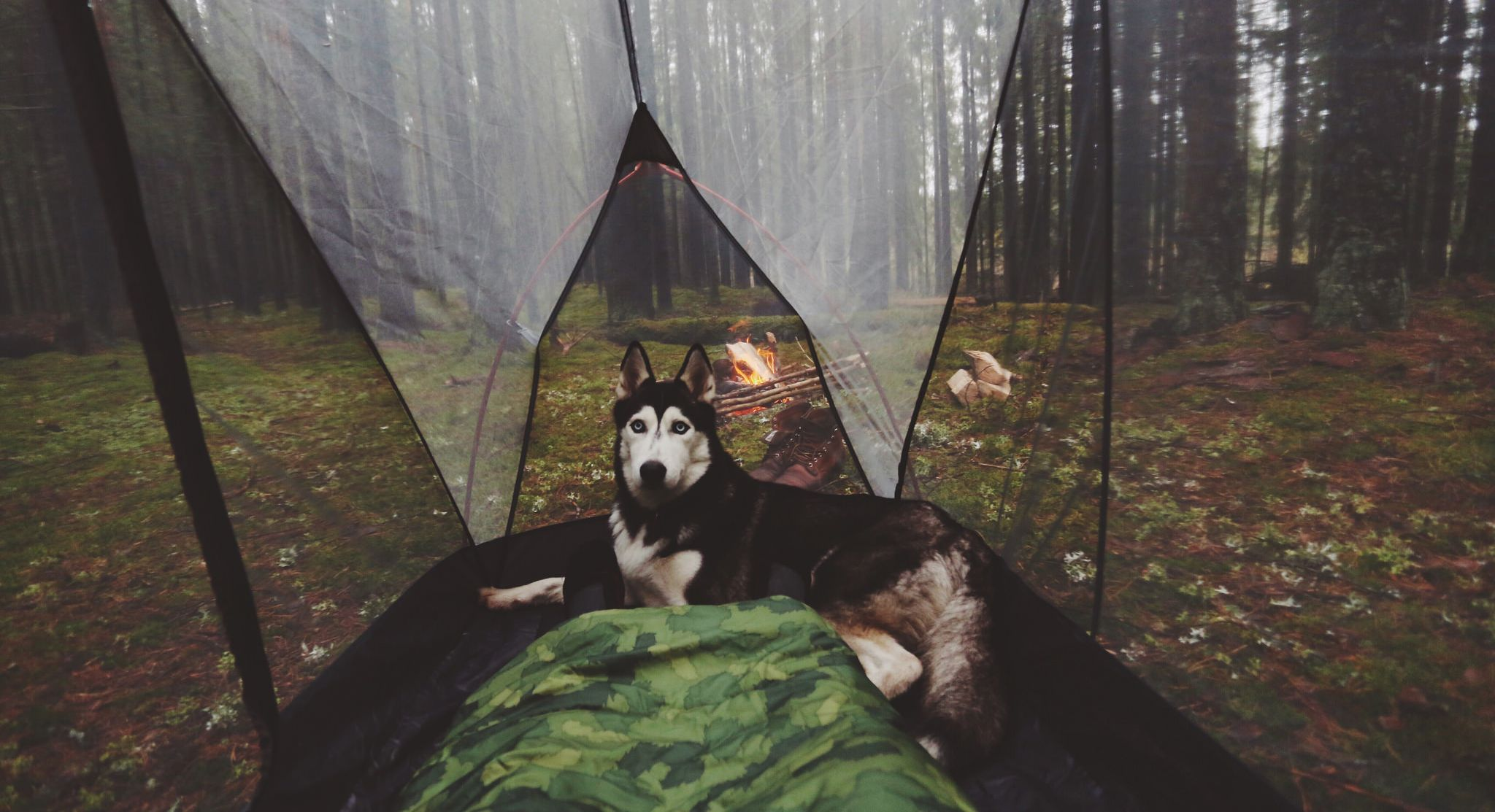 A Russian couple explore the wilds of their vast country with their beautiful pack of huskies.