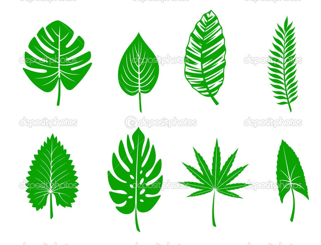 Jungle Leave Template For Foam Party Decor Mdb Leaf Coloring