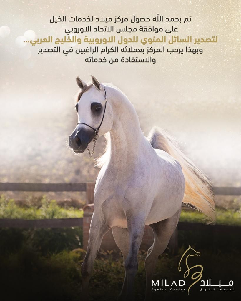 Pin Auf Arabian Horses News