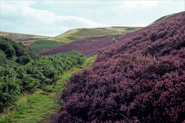 abbey brook path - have to see the heather!!!