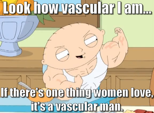 Stewie griffin vascular quotes