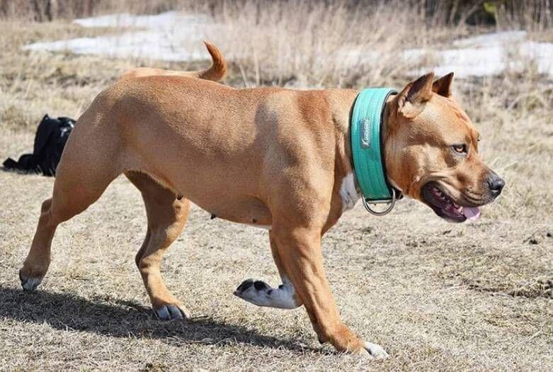 270 Aggressive Dog Names Dog Names Aggressive Dog Dogs