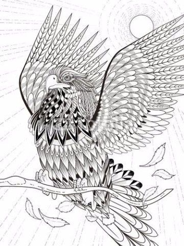 imagenes de aguilas volando para colorear   ilustraciones ...