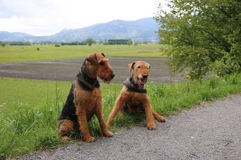 Jahreszeiten Hunde Und Jahreszeiten