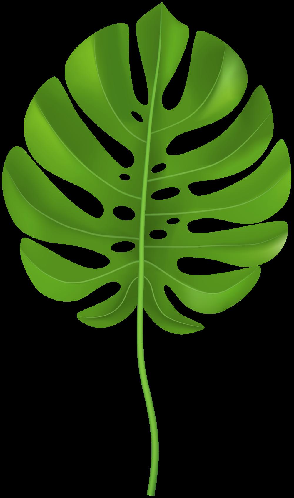 Tropical Leaves Clipart 212 Bunga Cat Air Seni Dinding Lukisan Kaktus