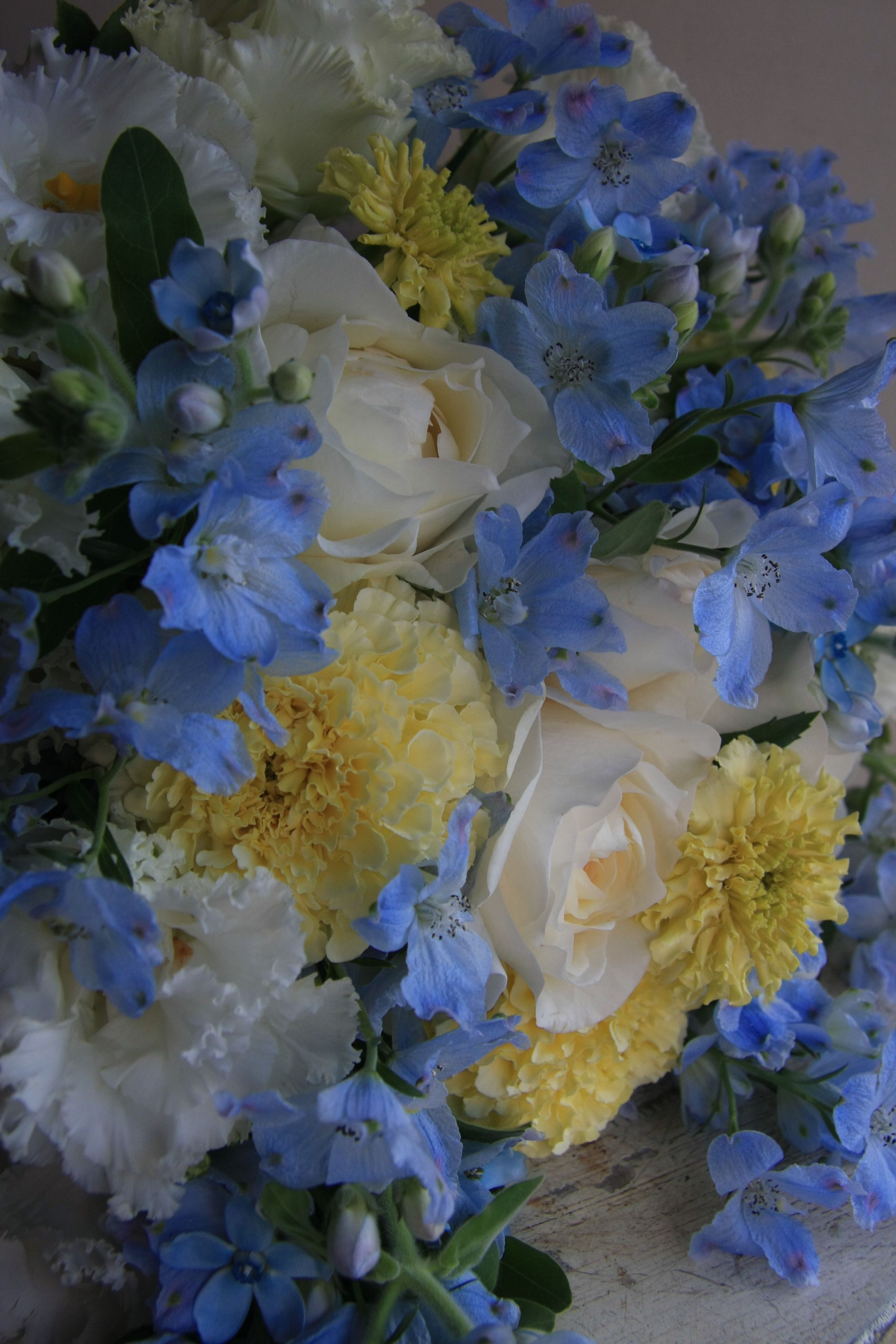 I Love Yellow And Blue Together Flowers Pinterest Flowers