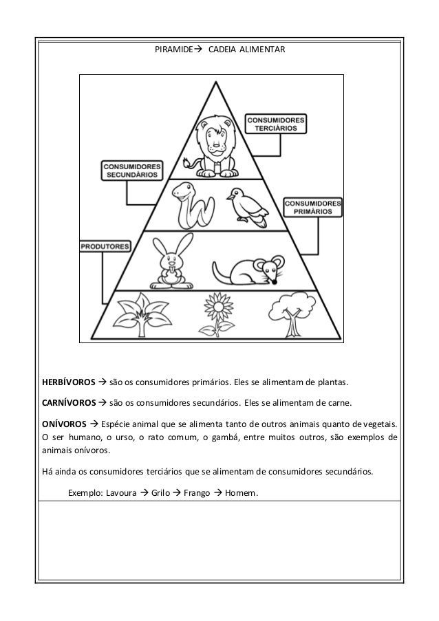 Populares PIRAMIDE CADEIA ALIMENTAR | 4*ano | Pinterest | Pirâmides  UA11