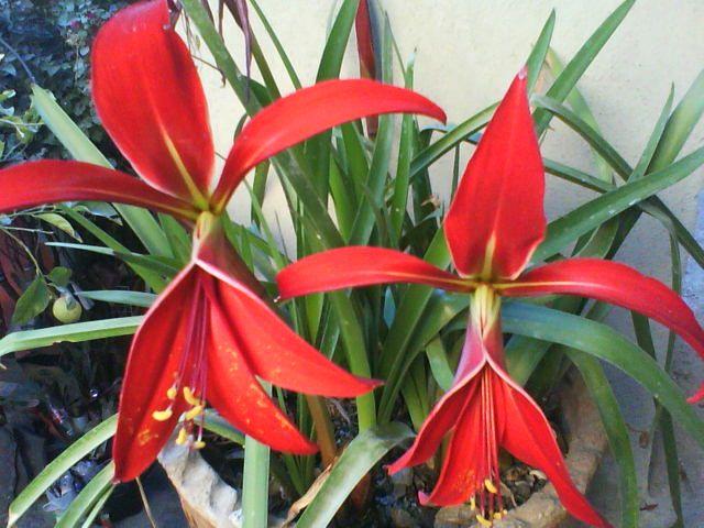 Flor de Lis | Flores y más flores! | Pinterest | Flor de lis, Flor y ...