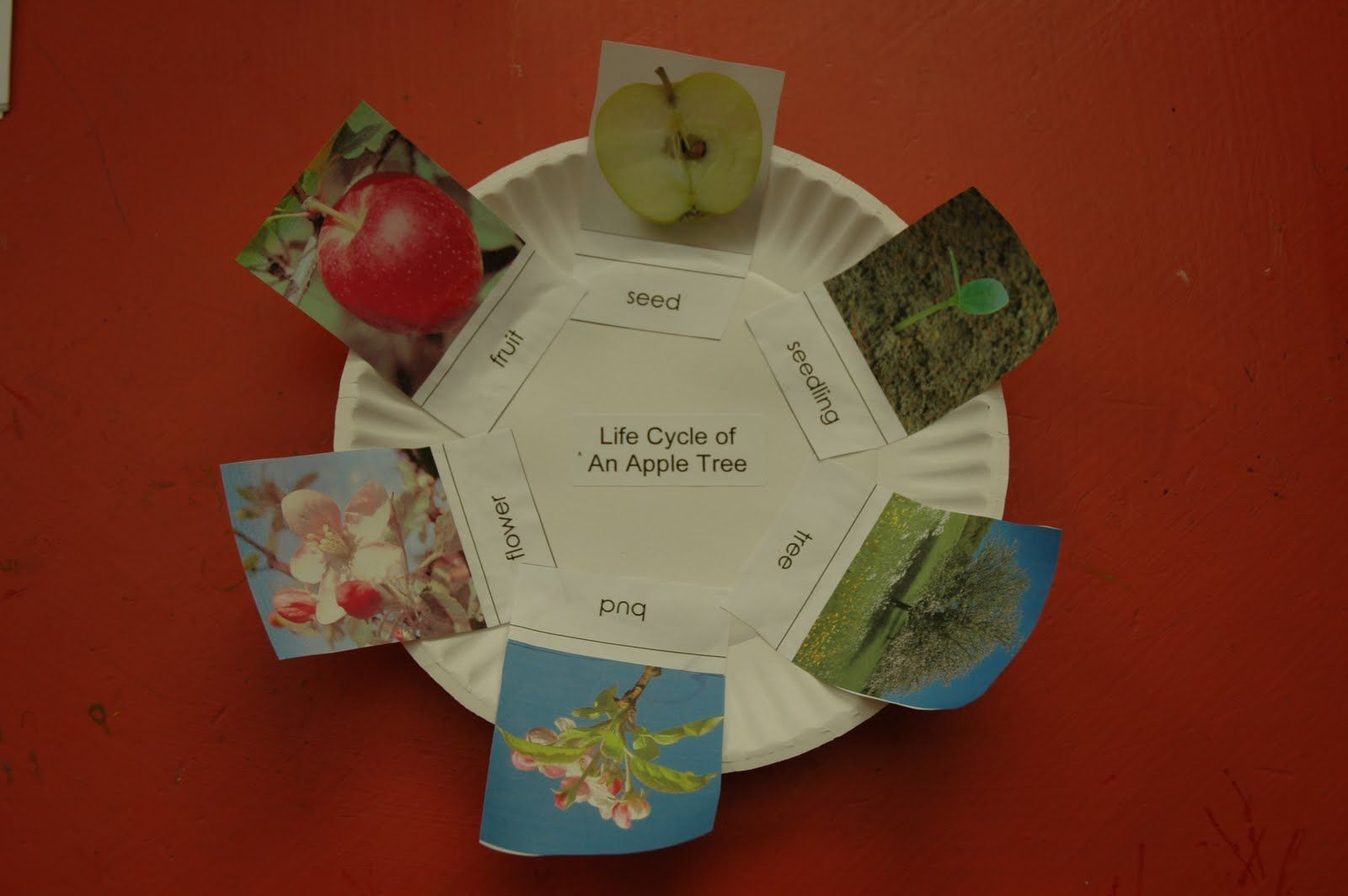 Life Cycle Of An Apple Tree Social Stu S