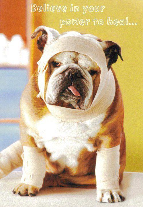 Pin Van Virginia Panto Op Bullies Beterschap Grappige Plaatjes Bulldog