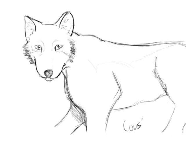 Bien connu comment dessiner un loup facile | Dessin loup. | Pinterest  DO09