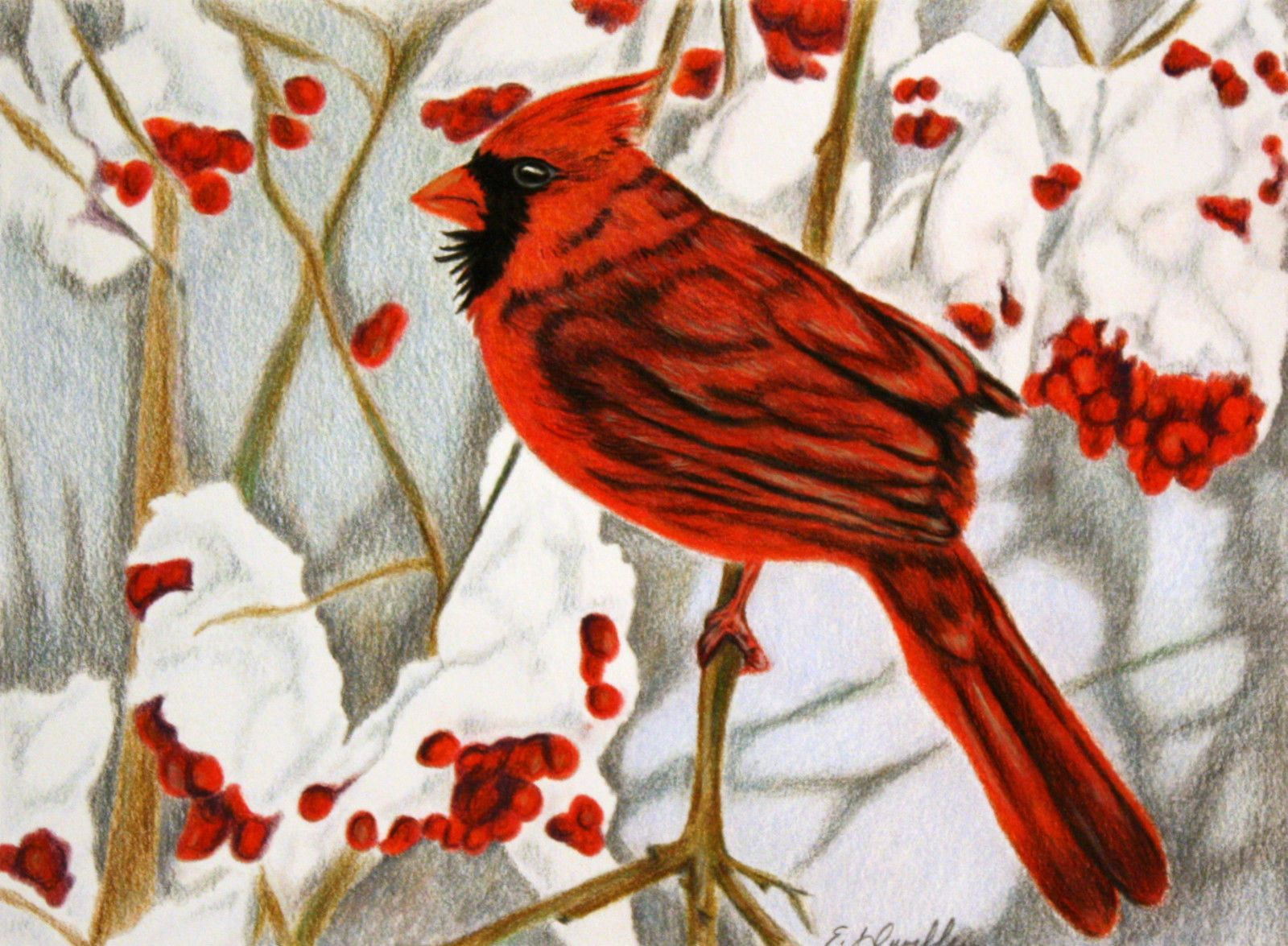original colored pencil painting red cardinal bird in winter