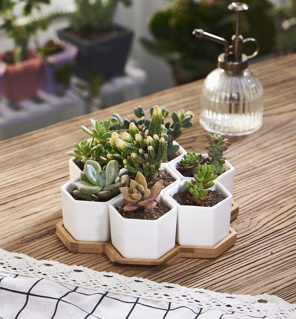 Planter Pots Indoor, Flowerplus 7 Pack 2.75
