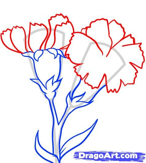 How To Draw Carnations Step 4 Flower Drawing Carnation Drawing Floral Drawing