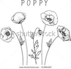 Image result for poppies with birds illustrations for embroidery poppy flower clip art or illustration buy this stock vector on shutterstock find other images mightylinksfo