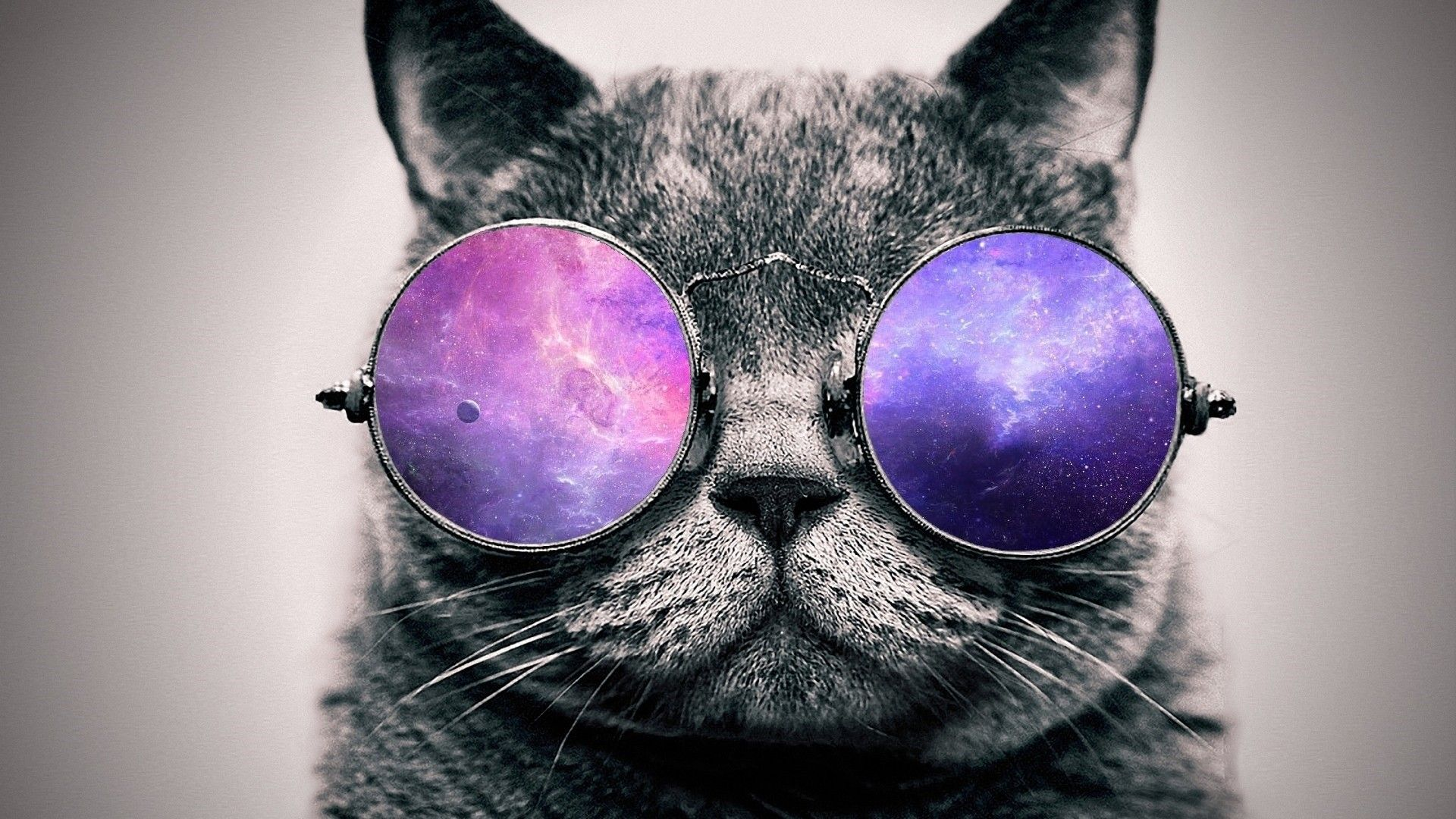 Pin de Joahnn Hills en Cute Animals Gato con lentes