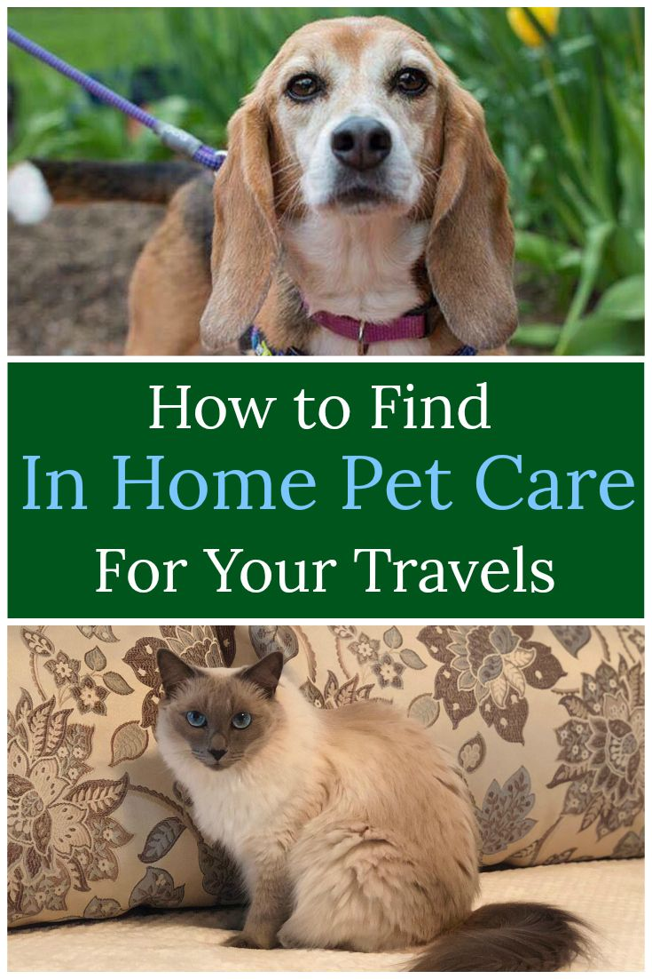 Alternatives to Kennels In Home Pet Care Why You Should