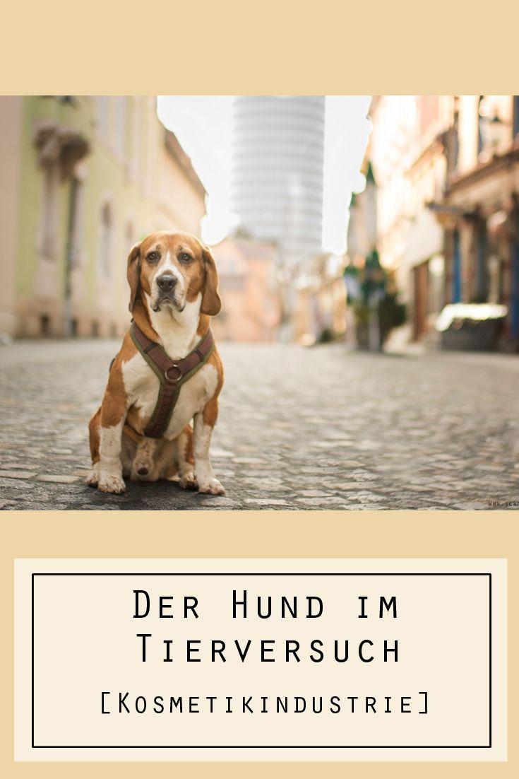 Der Hund im Tierversuch Hunde, Tiere, Tierheim hunde