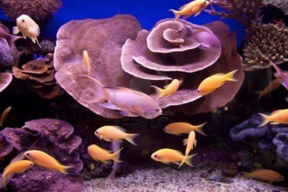 Faune Et Flore Marine Poissons Tropicaux Abysses Balades Nature Et Passions Faune Et Flore Poisson Tropical Faune
