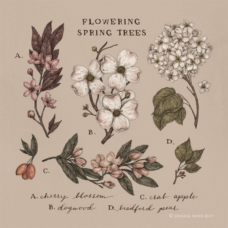 Jessica Roux Illustration Photo Spring Tree Art Botanical Illustration Art Prints